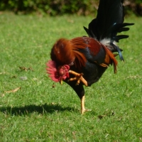 [PHOTO] of the Day:  The Chicken Dance