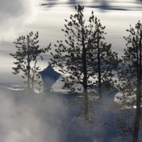 [PHOTO] of the Day:  Yellowstone Trees