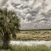 [PHOTO] of the Day:  A Lone Tree in Loxahatchee