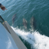 Thumbnail image for Let's Go Whale Watching LA, Shall We? [PHOTOS]