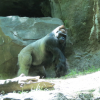 Thumbnail image for Let's Go to the Bronx Zoo – Shall We?