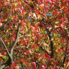 Thumbnail image for Fall Comes to New York