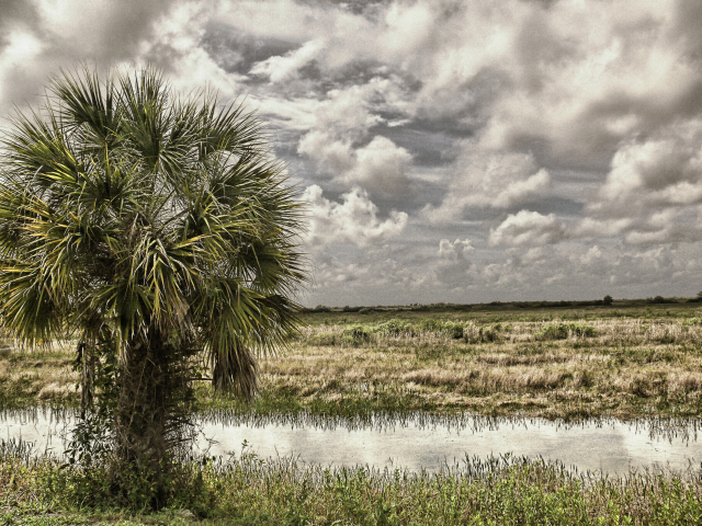 Lone Tree in Loxahatchee National Wildlife Refuge